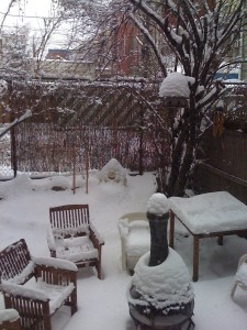 Our snowy Williamsburg, Brooklyn backyard
